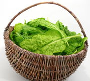 Sheet vegetable Stock Photography
