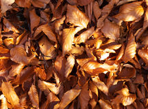 Sheets. Autumn sheet to lie heap on grief Royalty Free Stock Photo
