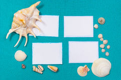 Sheets of paper with shells. White card on a blue background with shells Stock Photos