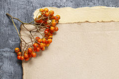 Sheets of vintage paper and rowan berry twigs Stock Photo
