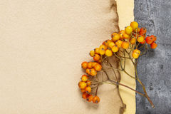 Sheets of vintage paper and rowan berry twigs Stock Images