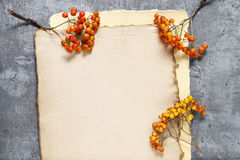 Sheets of vintage paper and rowan berry twigs Royalty Free Stock Image