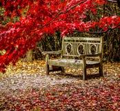 Sheff Park-0602 Royalty Free Stock Image