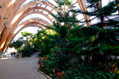 Sheffield winter gardens. Winter gardens at Sheffield, one of Europe's largest glasshouses, with striking parabolic architecture Stock Images