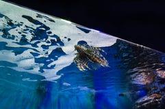 sheikh θέσης λιονταριών ψαριών EL sharm Στοκ φωτογραφίες με δικαίωμα ελεύθερης χρήσης