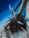 sheikh σκορπιών θέσης ψαριών EL sharm στοκ εικόνες με δικαίωμα ελεύθερης χρήσης