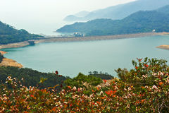 Shek Pik reservoir and red leaves Royalty Free Stock Image