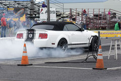 Shelby drag Royalty Free Stock Images