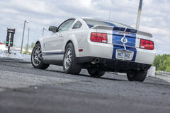 2008 shelby gt 500 Royalty Free Stock Image