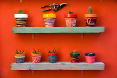Shelf full of cacti Royalty Free Stock Image