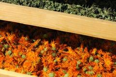Shelfs con le piante secche Immagine Stock
