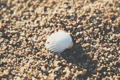 Shell à l'arrière-plan de plage de sable photographie stock