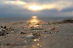 Shell à la plage images libres de droits