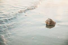 Shell à terre dans les vagues images stock