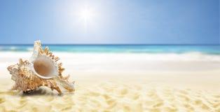 Shell à une plage images libres de droits