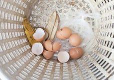 Shell ägg i korgen Fotografering för Bildbyråer