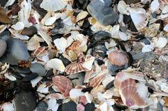 Shell échouent à la peau, île de Man Images stock