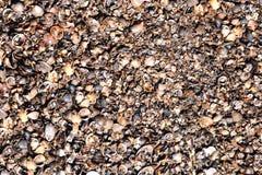 Shell écossent le fond de texture images stock