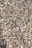 Shell ścierwo wtykający na skałach Obrazy Stock