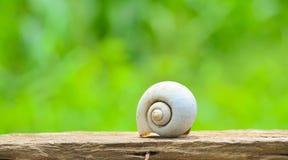 Shell ślimaczek Zdjęcia Stock