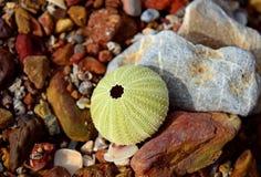 Shell και βράχοι Στοκ Φωτογραφίες