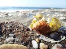 Shell και παραλία Στοκ φωτογραφία με δικαίωμα ελεύθερης χρήσης