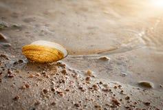 Shell κοντά στο νερό στοκ φωτογραφία