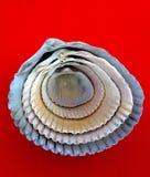 Shell σε ένα κοχύλι Στοκ Εικόνα