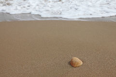 Shell σε μια αμμώδη παραλία στοκ φωτογραφία με δικαίωμα ελεύθερης χρήσης