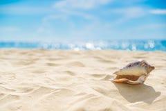 Shell στην άμμο στην παραλία και το μπλε ουρανό και bokeh τη θάλασσα στοκ εικόνες με δικαίωμα ελεύθερης χρήσης