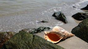 Shell στην άμμο στην παραλία με τους βράχους απόθεμα βίντεο