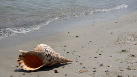 Shell στην άμμο στην παραλία φιλμ μικρού μήκους