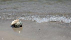 Shell στην άμμο στην παραλία απόθεμα βίντεο
