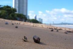Shell στην άμμο Στοκ εικόνες με δικαίωμα ελεύθερης χρήσης