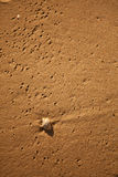 Shell στην άμμο Στοκ Εικόνες