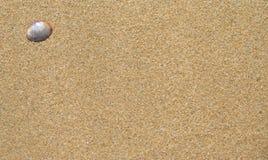Shell στην άμμο Στοκ εικόνα με δικαίωμα ελεύθερης χρήσης