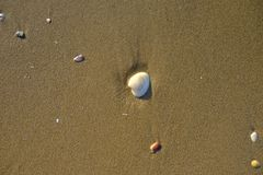 Shell στην παραλία άμμου Στοκ εικόνες με δικαίωμα ελεύθερης χρήσης