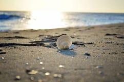 Shell στην παραλία στην ανατολή στοκ φωτογραφία