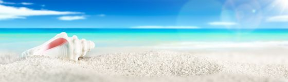 Shell στην παραλία στοκ εικόνα με δικαίωμα ελεύθερης χρήσης