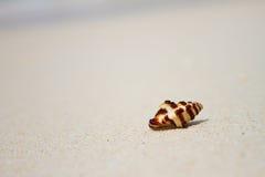 Shell στην παραλία άμμου Στοκ φωτογραφία με δικαίωμα ελεύθερης χρήσης