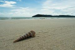 Shell στην παραλία Στοκ Φωτογραφίες