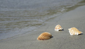 Shell στην παραλία Στοκ φωτογραφία με δικαίωμα ελεύθερης χρήσης