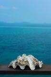 Shell στη θάλασσα Στοκ εικόνα με δικαίωμα ελεύθερης χρήσης