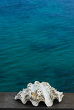 Shell στη θάλασσα Στοκ φωτογραφία με δικαίωμα ελεύθερης χρήσης