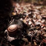 Shell του σαλιγκαριού Στοκ φωτογραφία με δικαίωμα ελεύθερης χρήσης