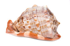 Shell 1 Stock Photos