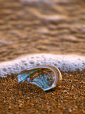 Shell 1 del olmo Foto de archivo libre de regalías