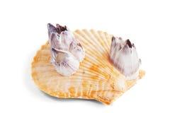 Shell foto de archivo libre de regalías