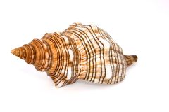 Shell Stock Photo