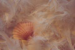 Shell images libres de droits
